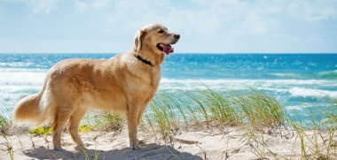 Familienurlaub mit Hund in Holland