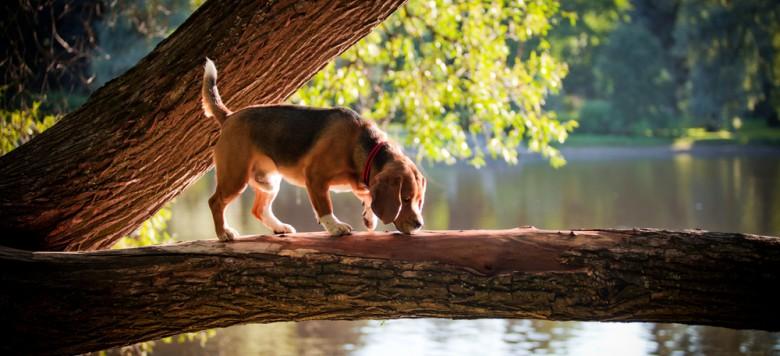 Verwöhntage am Wörthersee mit Hund