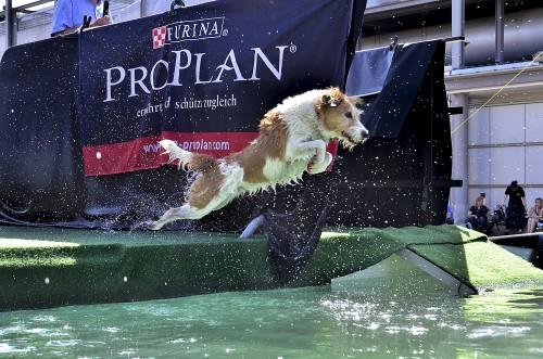 Dog Diving 3