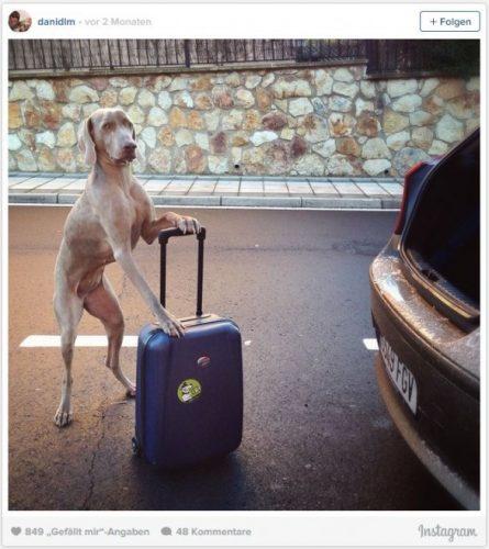 Hund-packt-Koffer-selbst-585x657