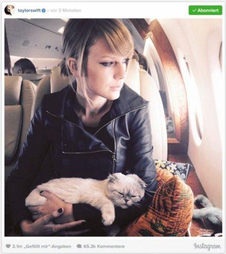 Taylor-mit-Katze-on-Tour-585x656