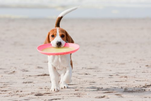 Hundestrände an der Nordsee