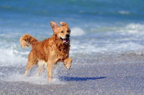 Hund im Meer am Hundestrand an der Nordsee