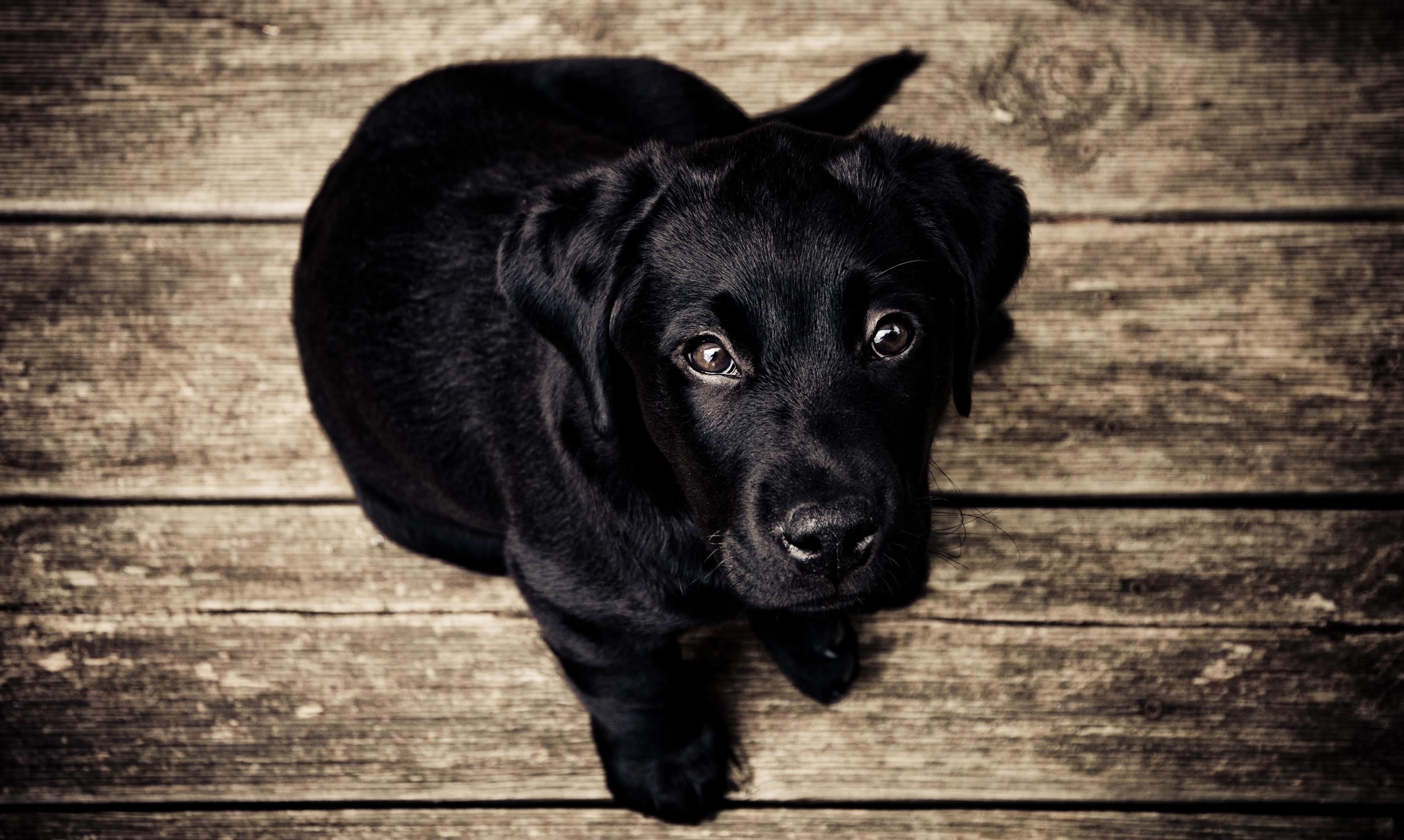 luxury dogs der online shop f r luxuri ses hundezubeh r. Black Bedroom Furniture Sets. Home Design Ideas