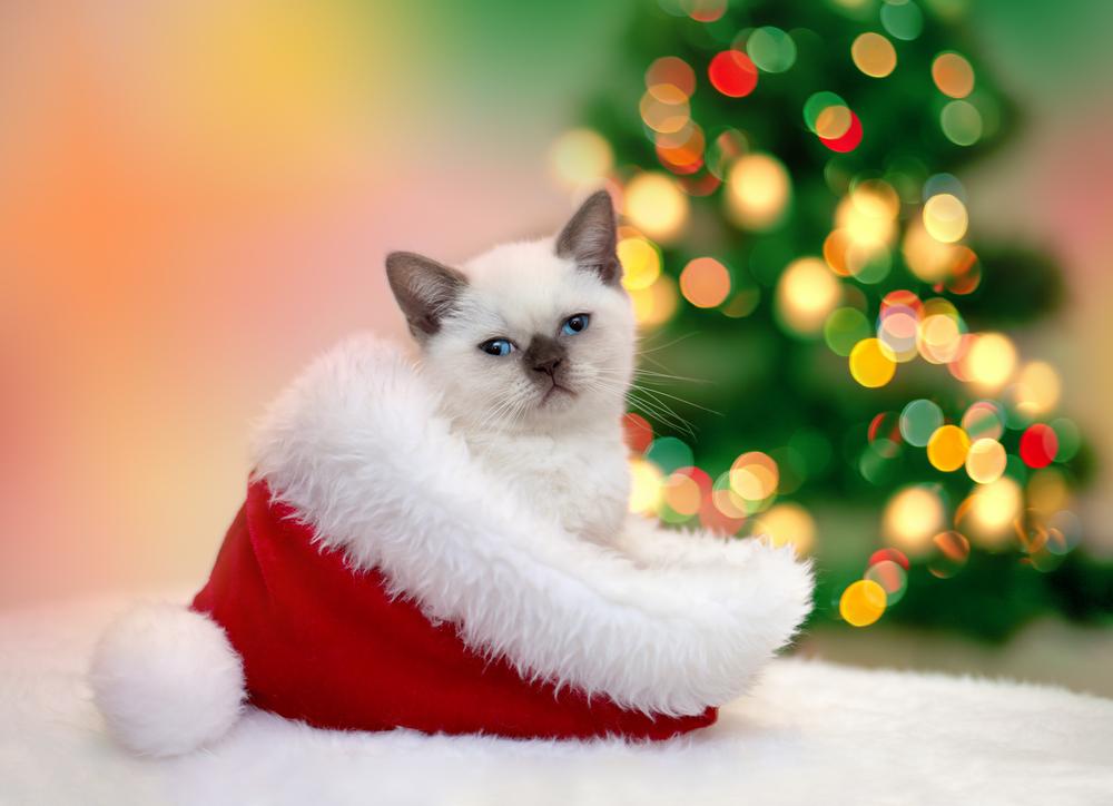 tiierisch Weihnachtswelt - tolle Geschenke für Haustiere