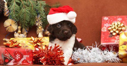 hund-weihnachten
