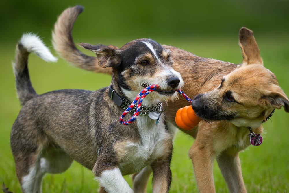 Hunde Pflege Spiele