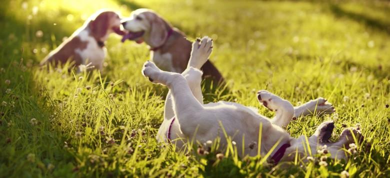 Hunde Spiele Gratis