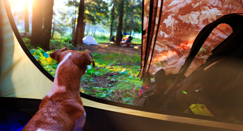 Reisezubehör für Hunde