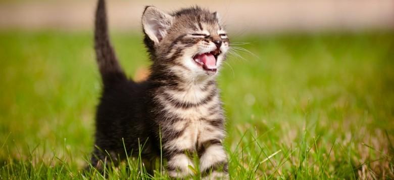 Zooroyal Kitten Special Starter Sets Zu G 252 Nstigen Preisen