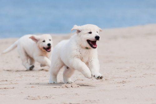 Urlaub mit Hund am Strand