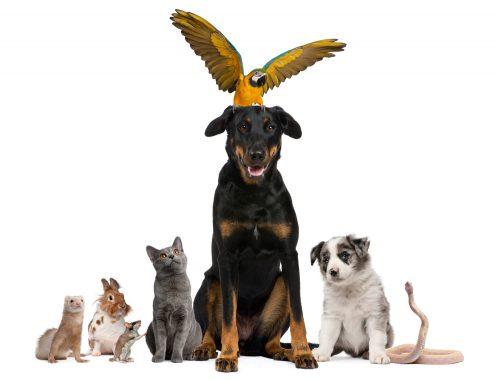 Gruppenbild Tier