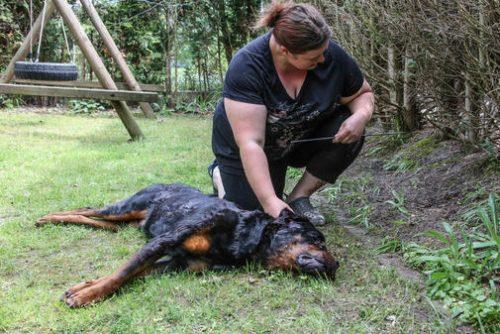 Haemelerwald-SEK-erschiesst-Rottweiler-Jago_ArtikelQuer