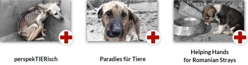Tierschutz-Shop Aktion