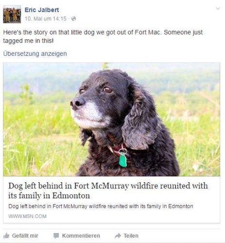 Waldbrand_Hund