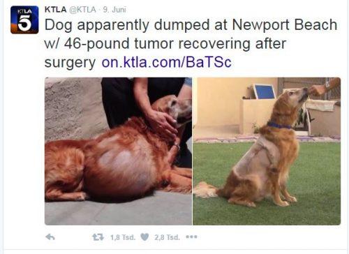 Hund mit Tumor