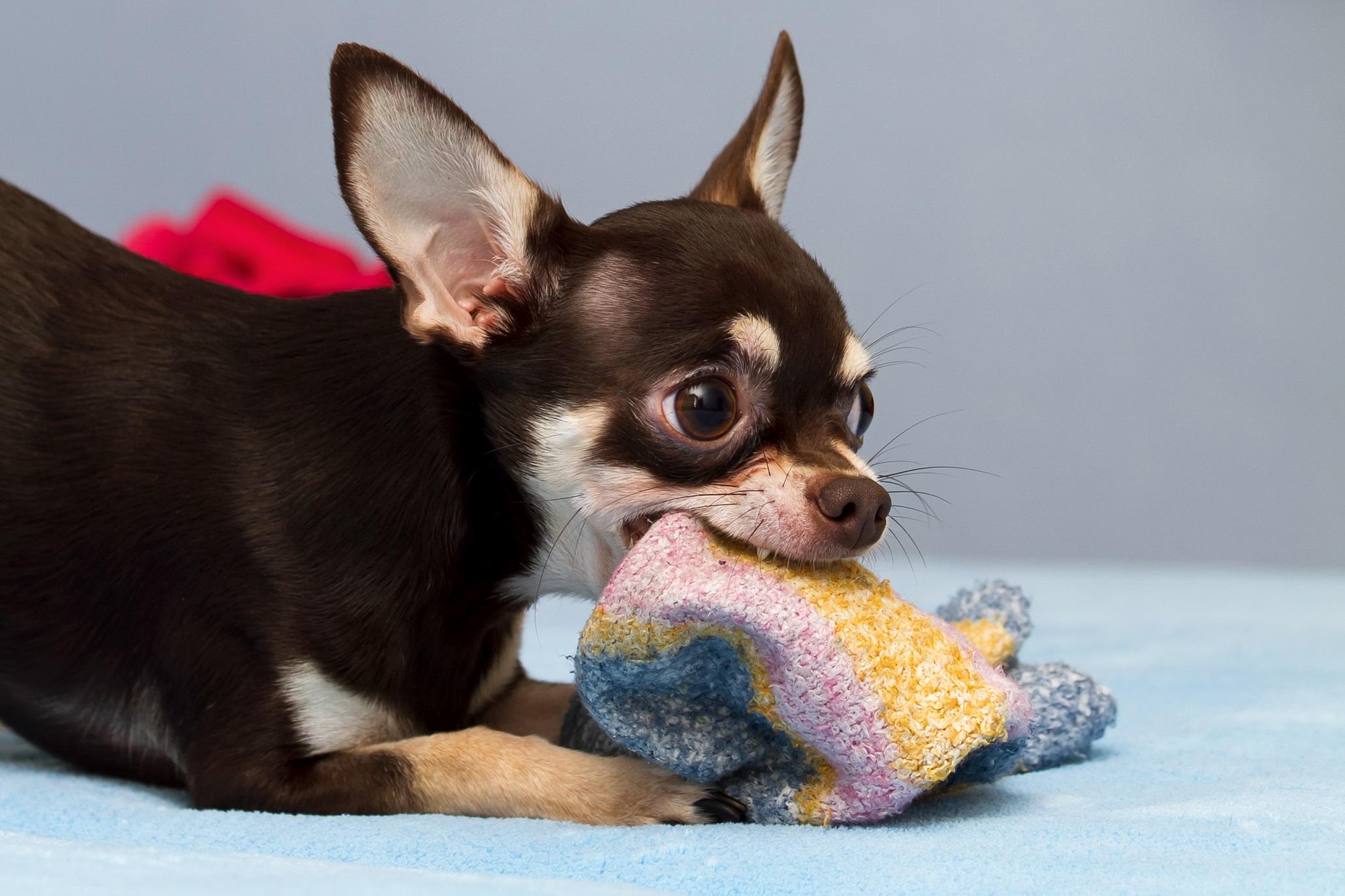 Euer Hund kann eine tolle Haushaltshilfe sein
