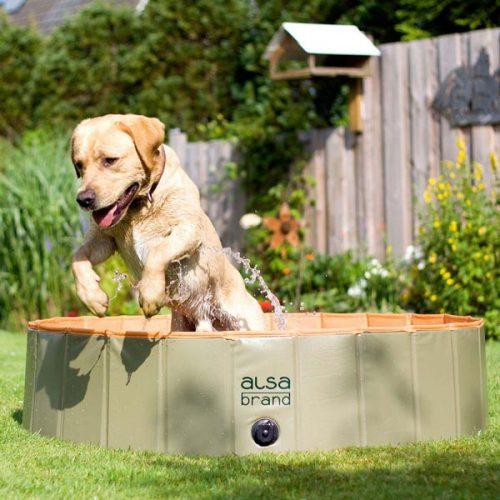 Dog-Playpool