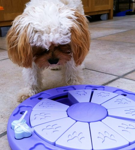 Dog Twister -10