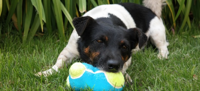 Testbericht kong quot on off squeeker für hunde