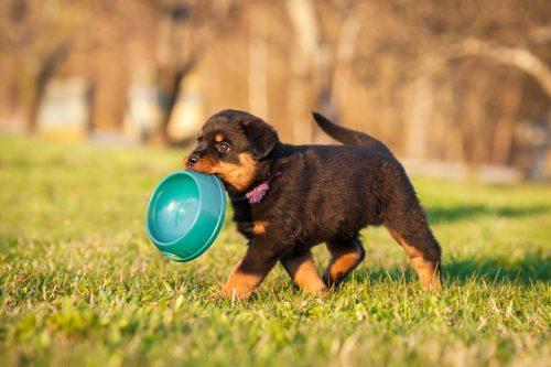 Kostenloses Hundefutter