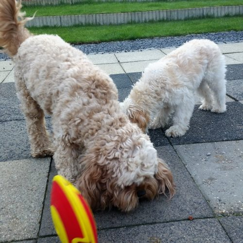 Dog Treat Maze -7
