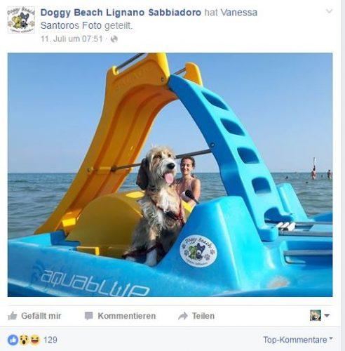 Doggy Beach2