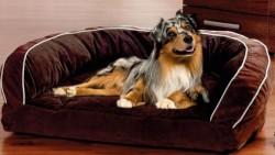 Hunde_Sofa