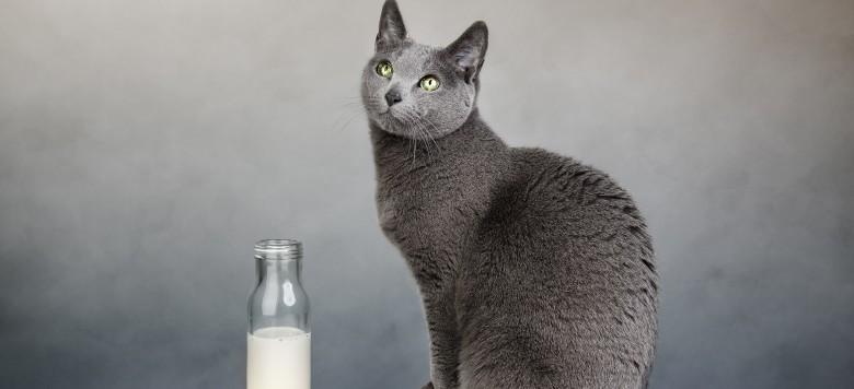 d rfen katzen milch trinken ist katzenmilch wirklich gesund. Black Bedroom Furniture Sets. Home Design Ideas