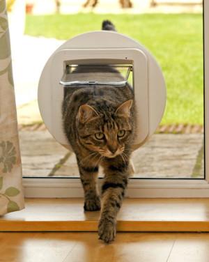 Gadgets für Haustiere
