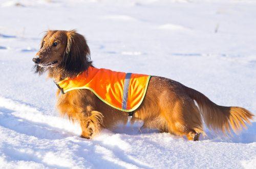 Hund-Weste