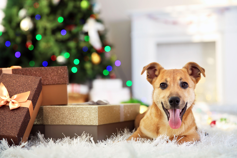 alsa nature weihnachts wundert te f r den hund. Black Bedroom Furniture Sets. Home Design Ideas