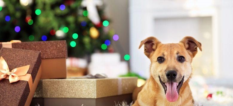 weihnachtsgeschenke f r hunde bei schecker. Black Bedroom Furniture Sets. Home Design Ideas