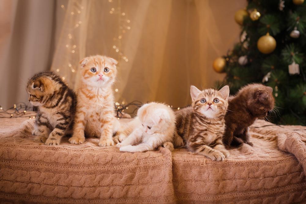 Kitten an Weihnachten