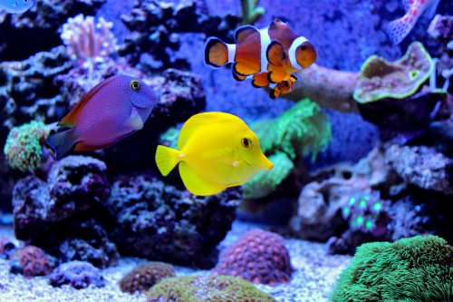 Marine fishes waiting for food