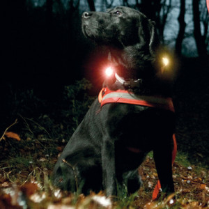 Leuchtanh+ñnger Saftey Light