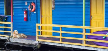 urlaub mit hund auf einem hausboot viele angebote schon ab 38 pro. Black Bedroom Furniture Sets. Home Design Ideas