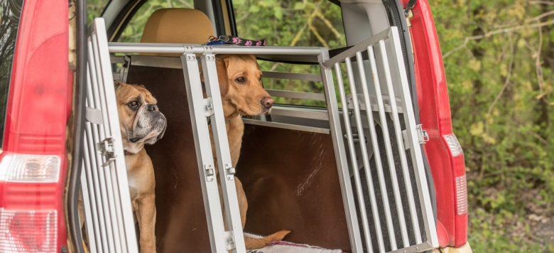 transportbox f r hunde sicher unterwegs im auto. Black Bedroom Furniture Sets. Home Design Ideas