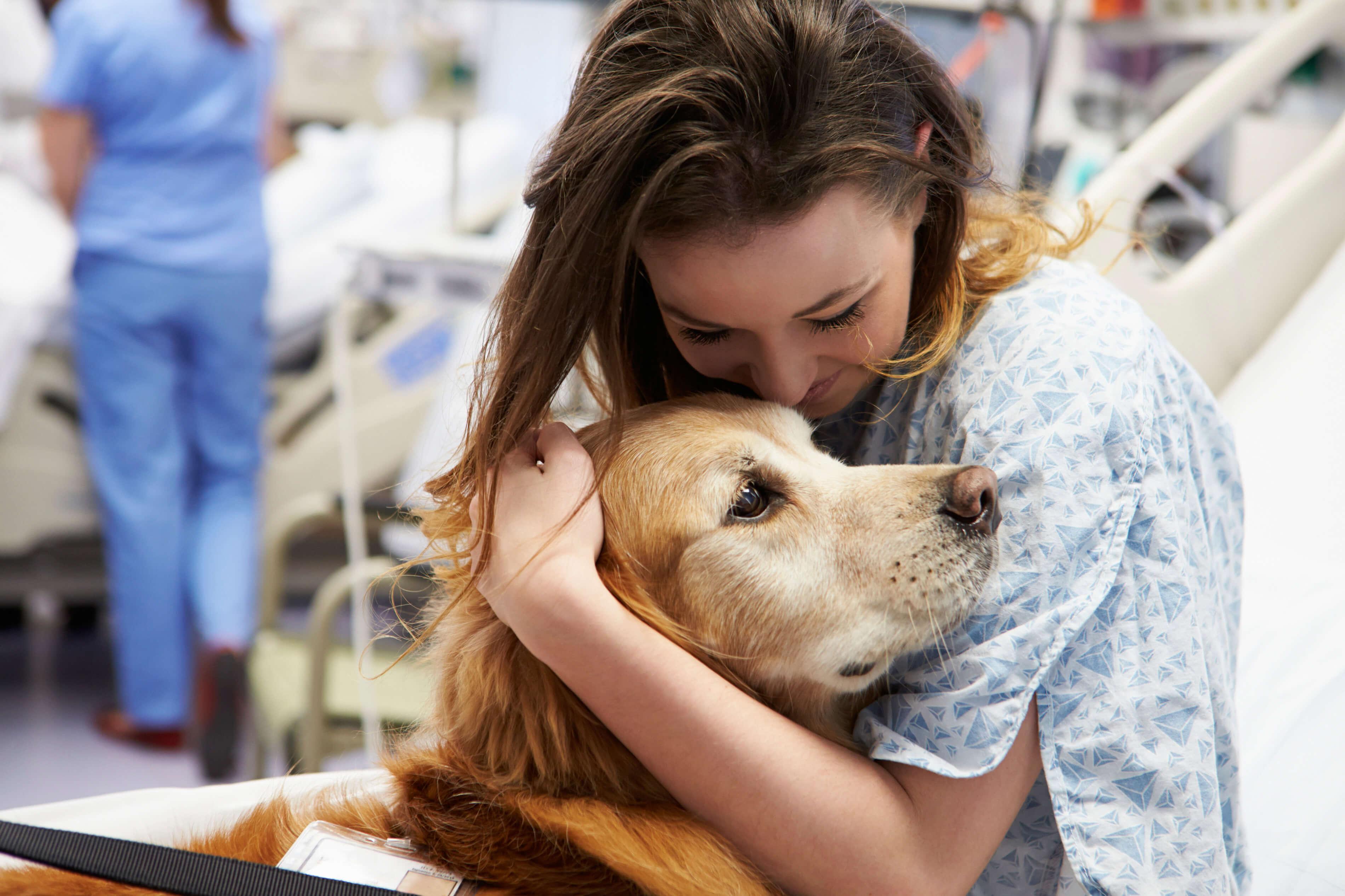 Golden Retriever als Therapiehund