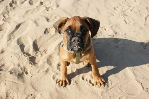 Hund am Nordseestrand