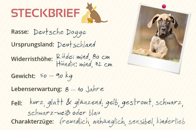 Deutsche Dogge Steckbrief