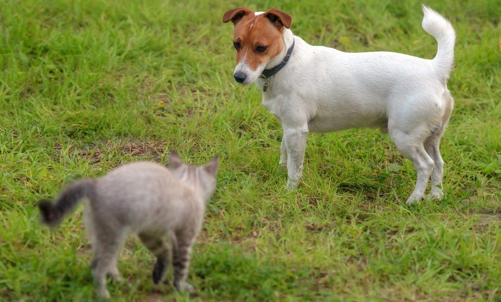 Begegnung von Hund und Katze