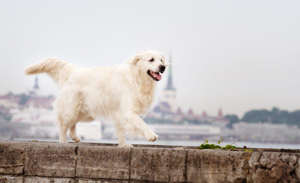Landgang mit Hund