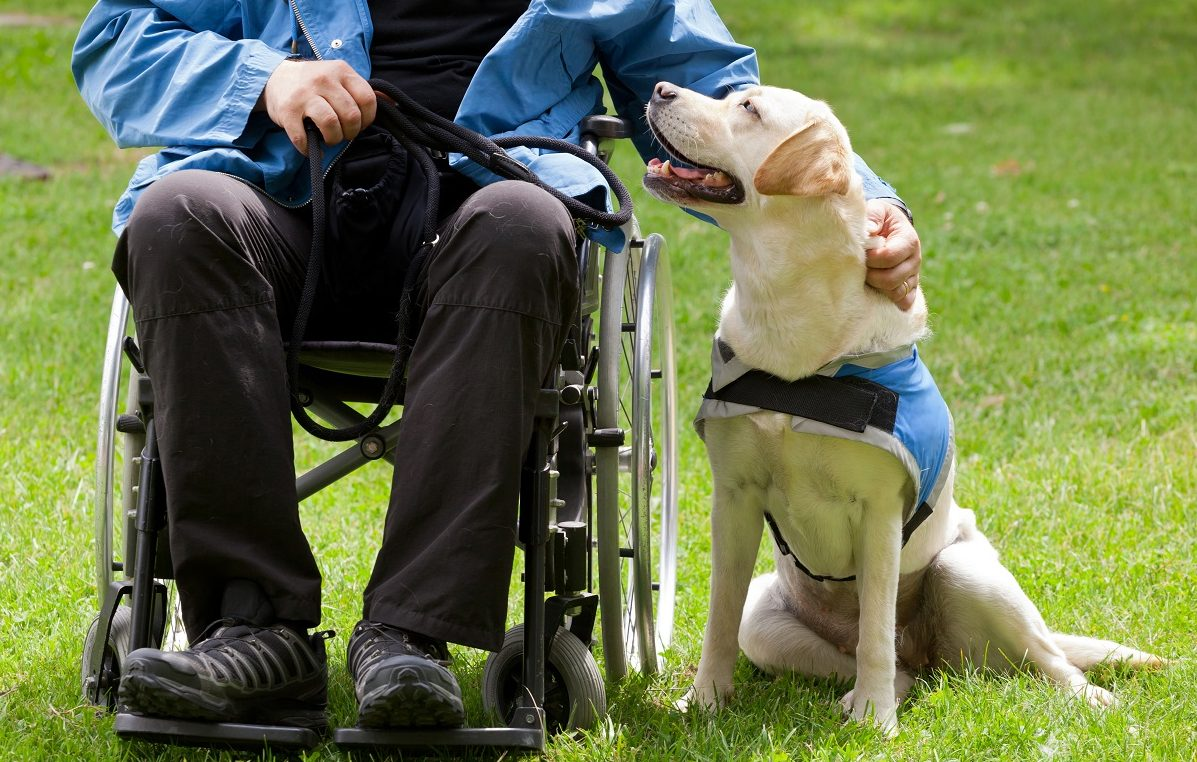 Assistenzhund zusammen mit seinem Besitzer
