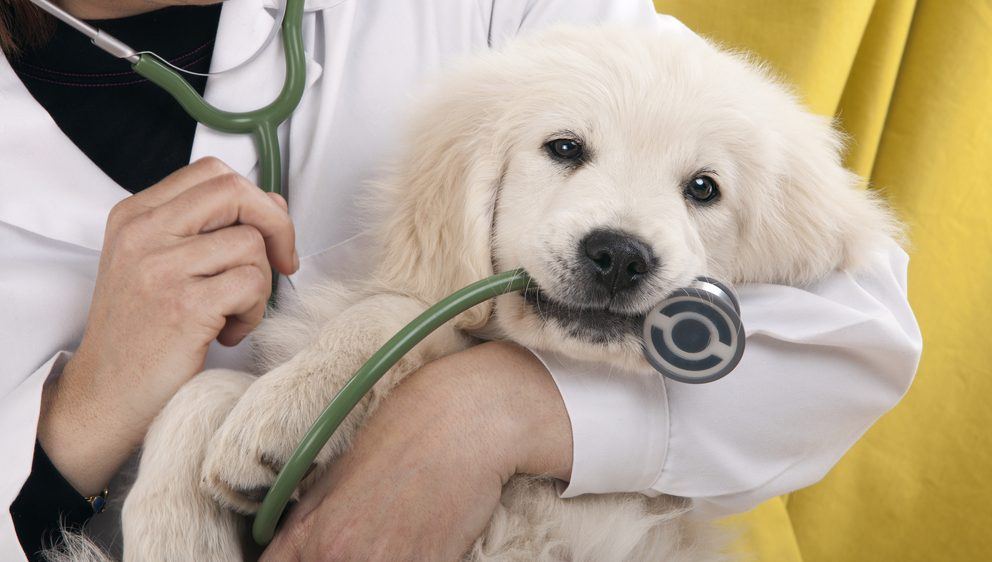 Tierarzt mit Hundwelpe