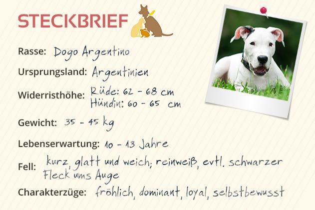 Steckbrief Dogo Argentino