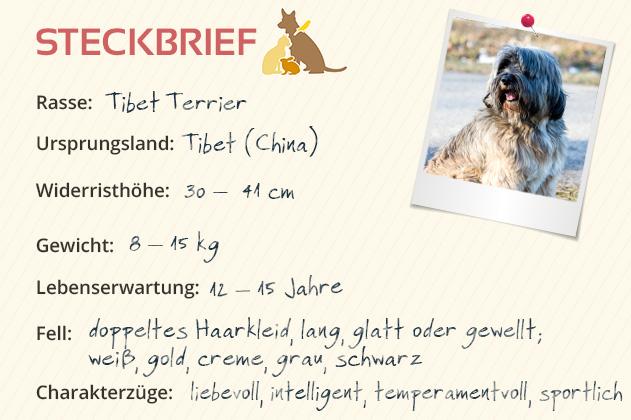 Tibet Terrier Steckbrief