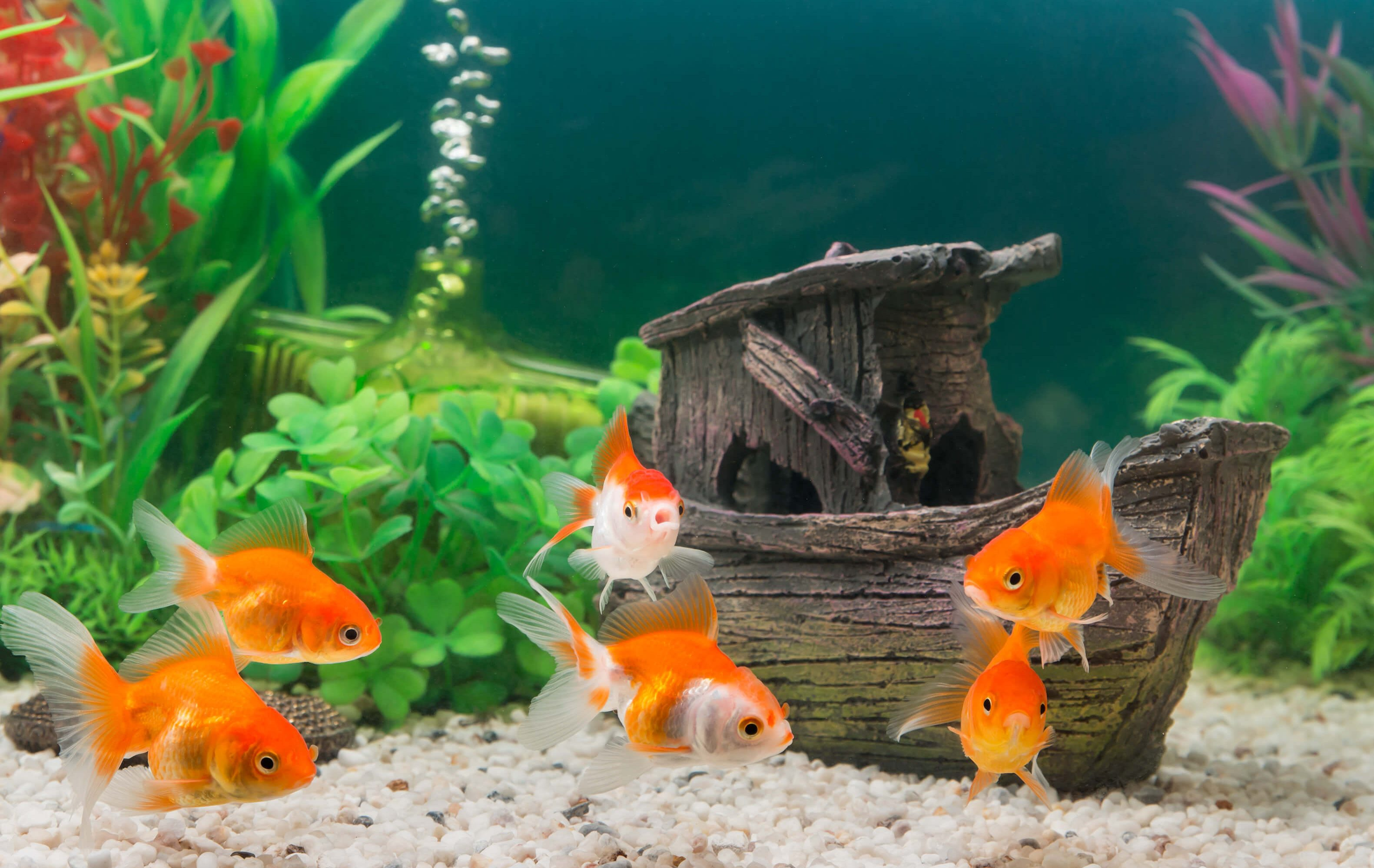 Welches haustier passt zu mir finde es hier heraus for Aquarium fische im teich