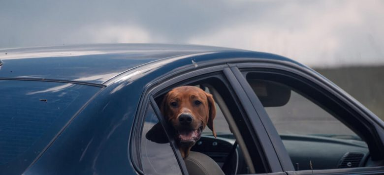 hund sicher im auto transportieren worauf ihr achten solltet. Black Bedroom Furniture Sets. Home Design Ideas