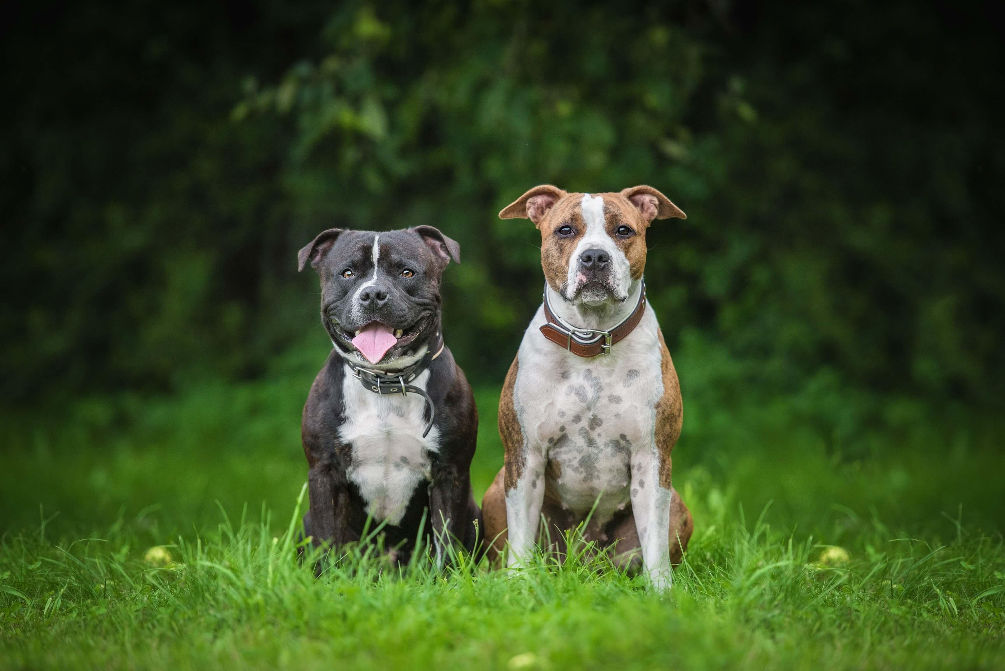 Nrw Listenhunde